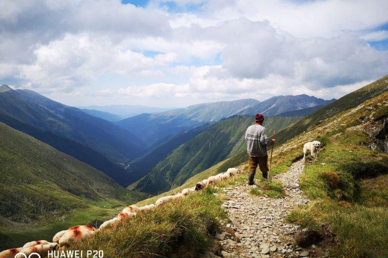 #povesteauneipoze – Ciobanul